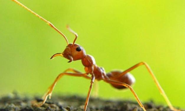 費絡蒙-螞蟻路上的光